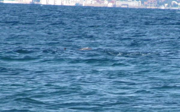Море с дельфинами